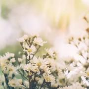 3月21日は春分の日。彼との記念日は、美しい自然と触れあう癒しデートへGO