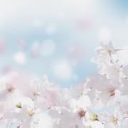 桜のプレゼント特集。新生活応援にも誕生日プレゼントにも贈れるギフトって?