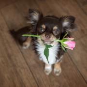 犬好きな母へのプレゼント。母の日に贈りたい「ワン!」ダフルな贈り物9選
