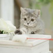 猫好きな母へ贈る猫グッズ。母の日には、ニャンだかハッピーなプレゼントを