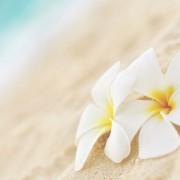 ハワイ好きな女友達へのプレゼント。夏らしさいっぱいのギフト9選