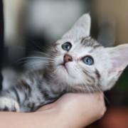 やっぱり猫が好き!「猫男子」が喜ぶキュートなプレゼント