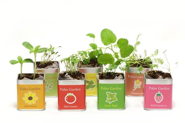 栽培セット 野菜とハーブの栽培キット 小さな栽培セット「Palm Garden」選べる3個セット