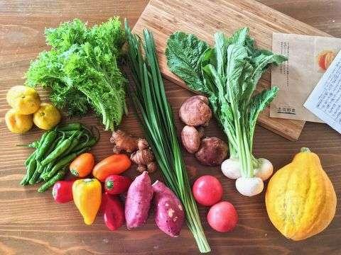 土佐野菜の詰め合わせBOX