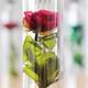 光の入り方や向きで変わるお花にうっとり!